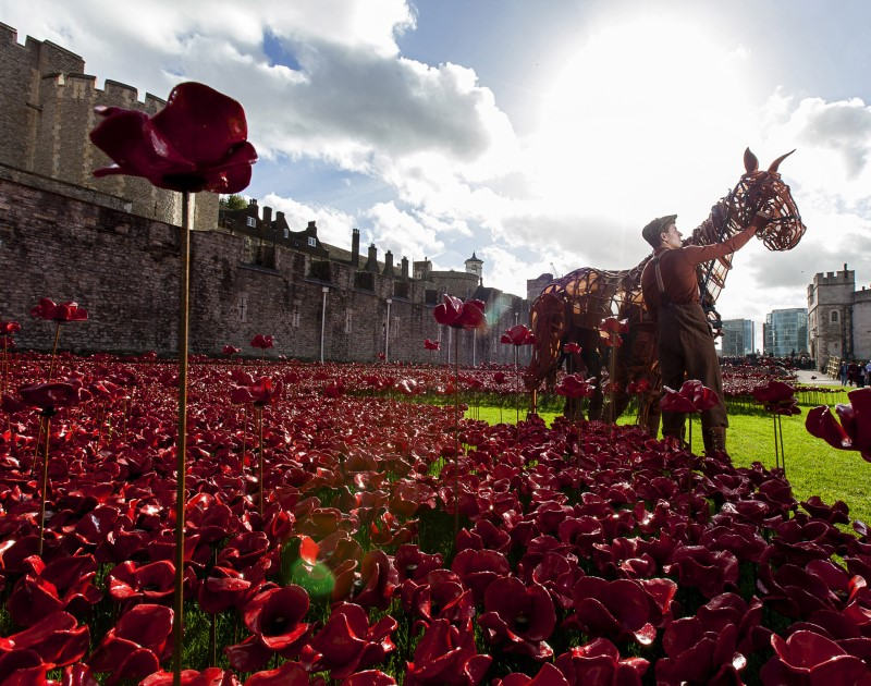 Joey star of War Horse at the Tower of London, photo by Alex Rumford
