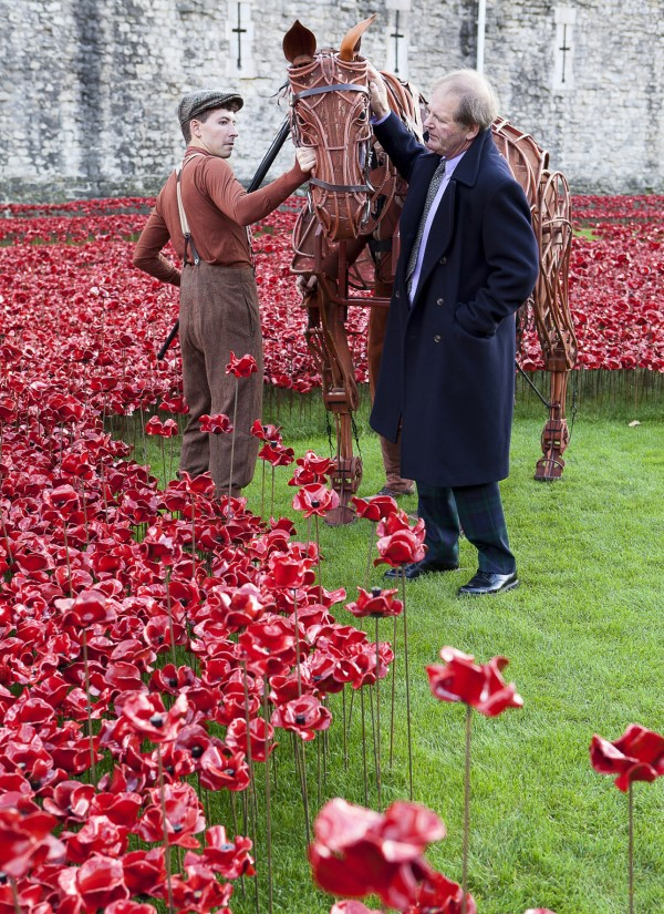 Joey star of War Horse and author Michael Morpurgo at the Tower of London, photo by Alex Rumford